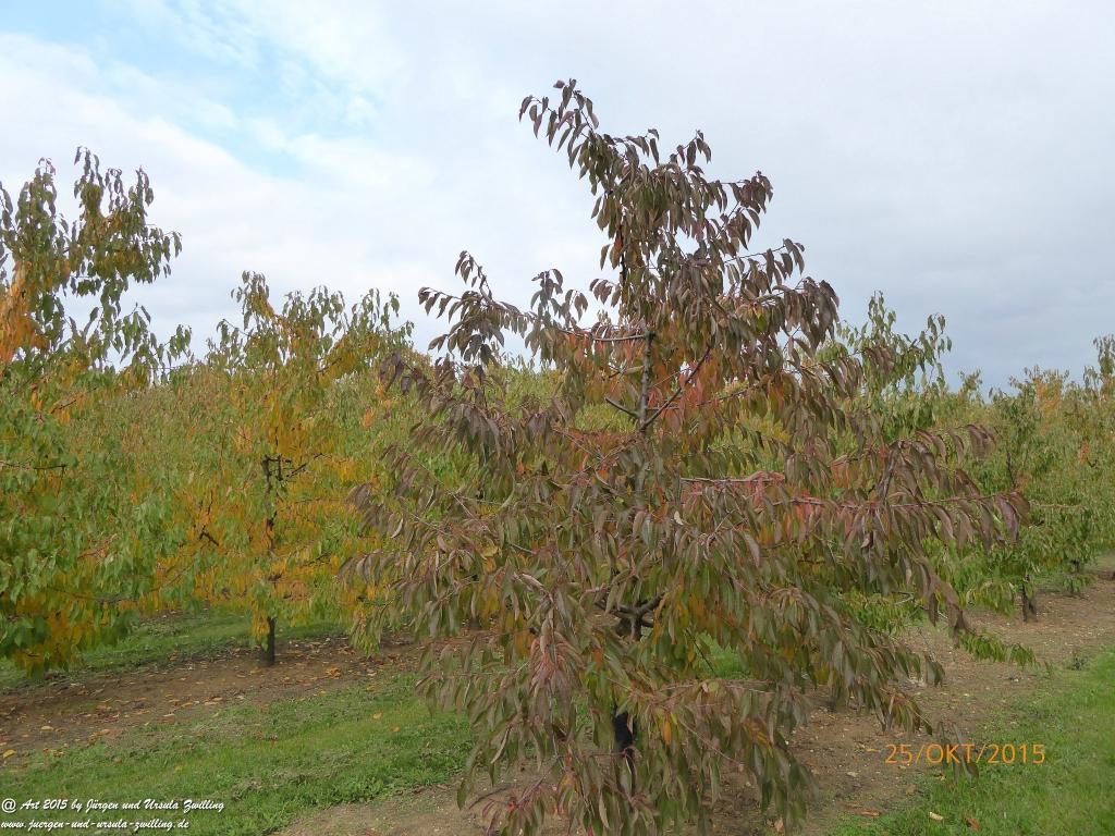 25.10.2015 Herbst-Impressionen in den Feldern von Mainz Finthen - Rheinhessen