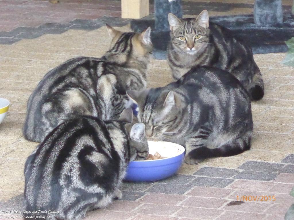 01.11.2015 Katze Mimi