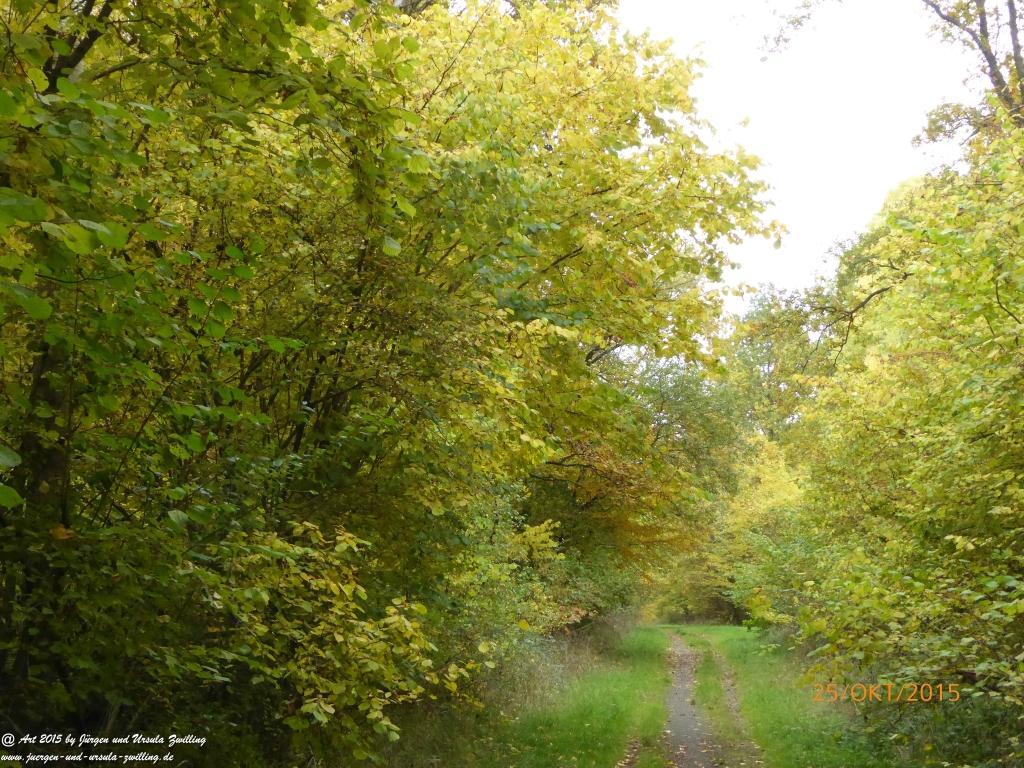 Herbst - Impressionen  im Ober Olmer Wald - Rheinhessen