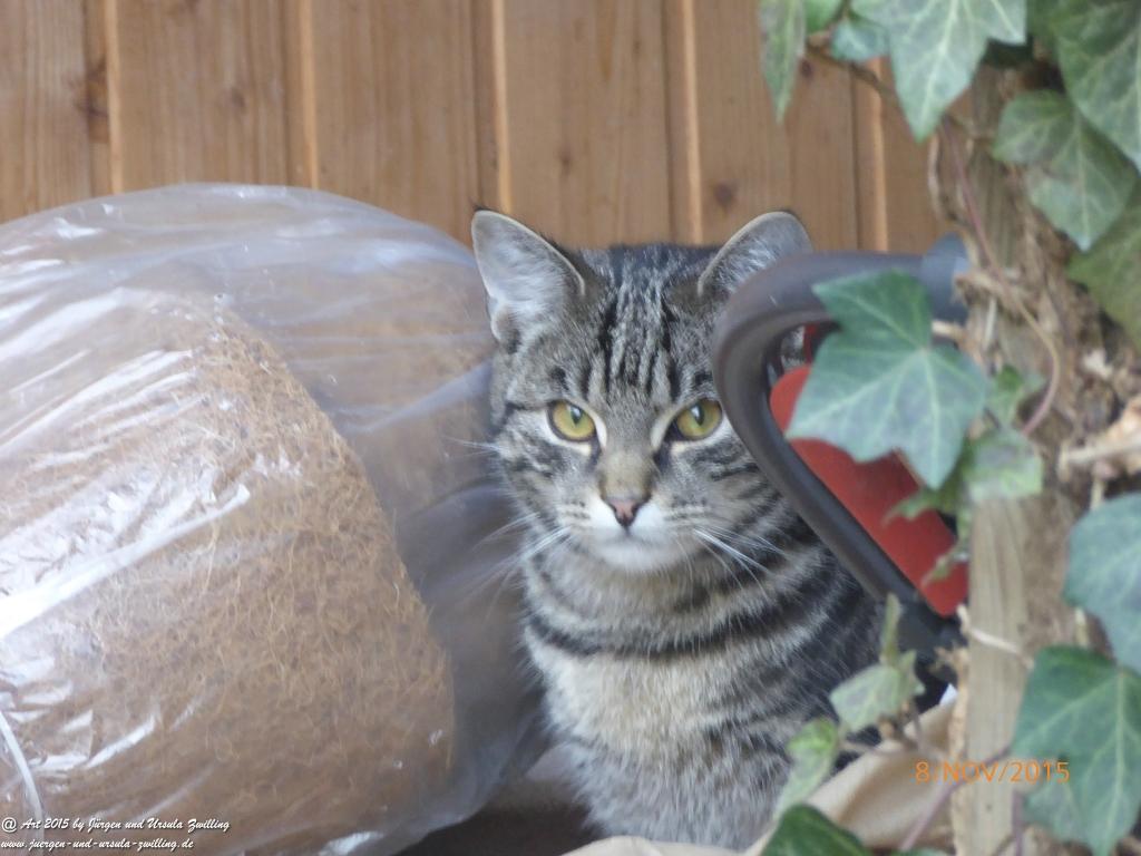 07.11.2015 Katze Mimi - Abendrot - Blick