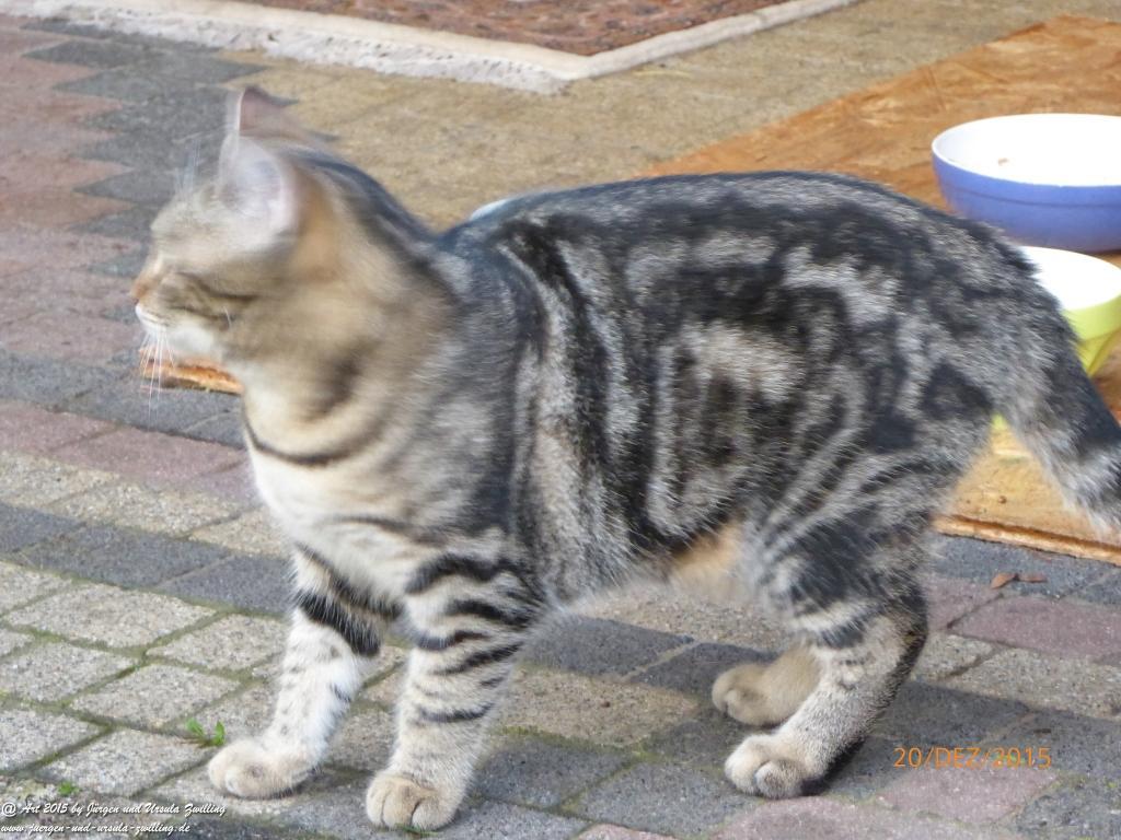 20.12.2015 Katze Mimi