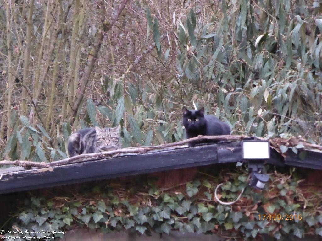 Katze Mimi auf dem kalten Dach