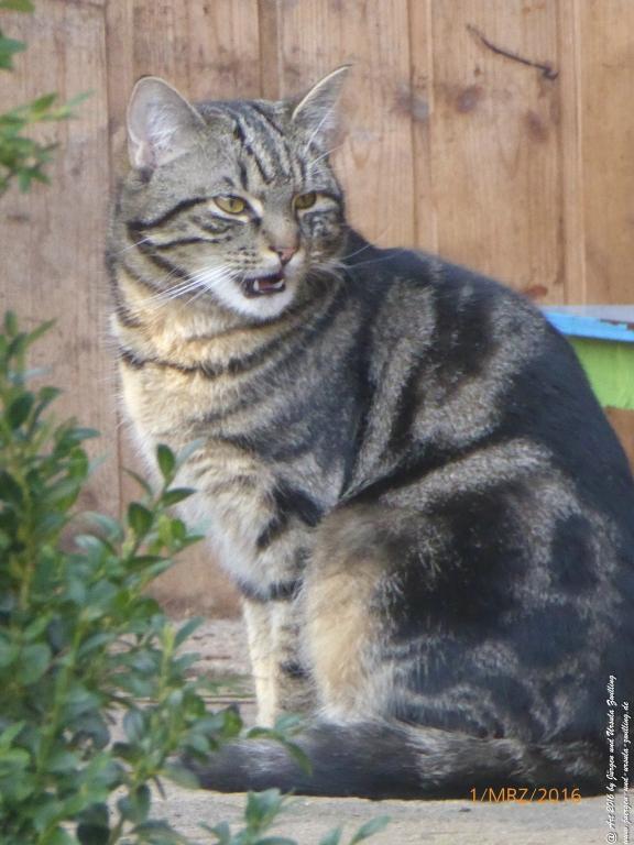Katze Mimi - Guten Morgen aus Mainz am Rhein