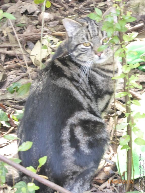 Katze Mimi - Frühlingsblick