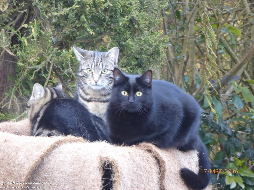 Krokusse und Katze Mimi Krokusblick