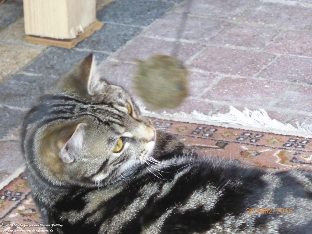 Katze Mimi - Garten start up an Ostern