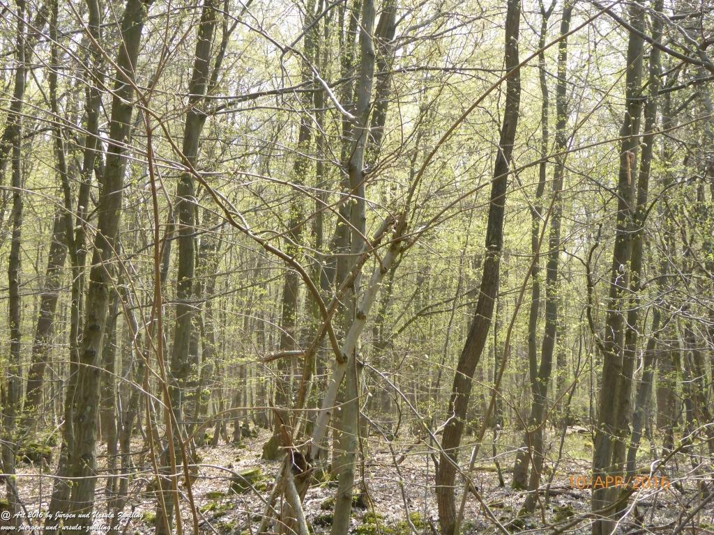 Frühlingsstart im Ober Olmer Wald