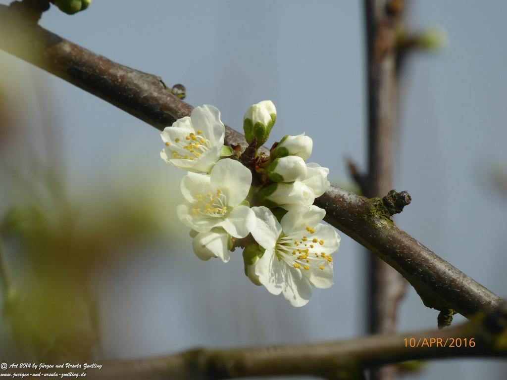 Blütenmeer Rheinhessen