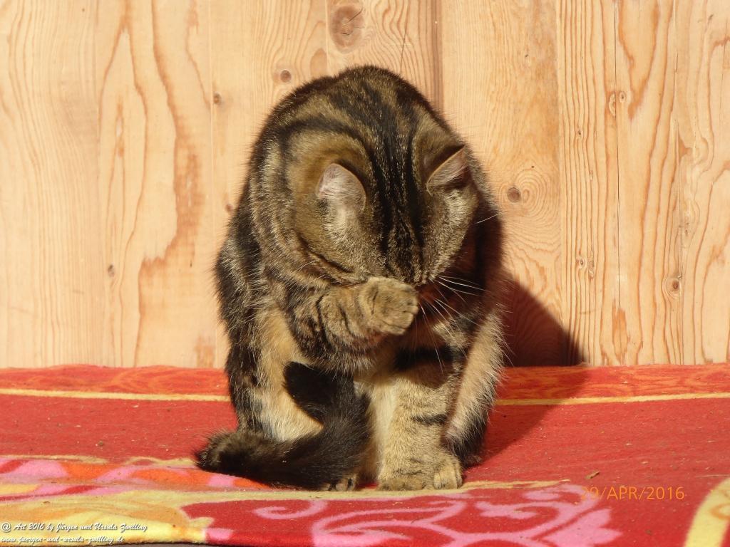 Katze Mimi Gebrauchsanweisung für Katzenwäsche