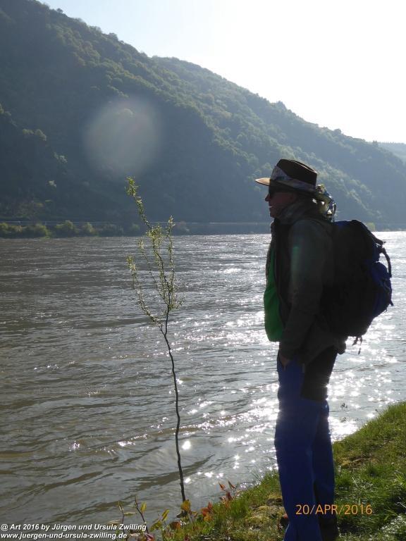 Philosophische Gänse Nachwuchs in Oberwesel am Rhein