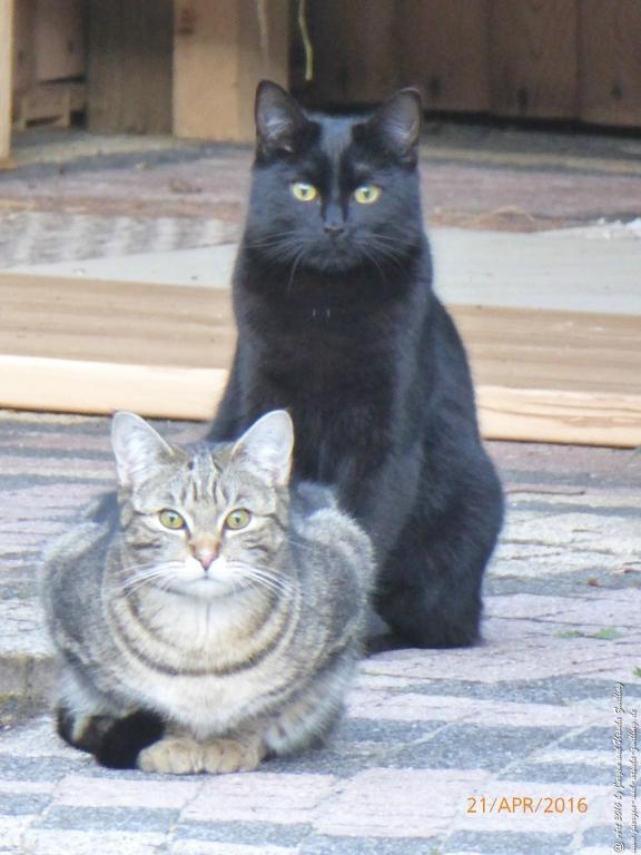 Katze Mimi beobachtet Start up der Farne