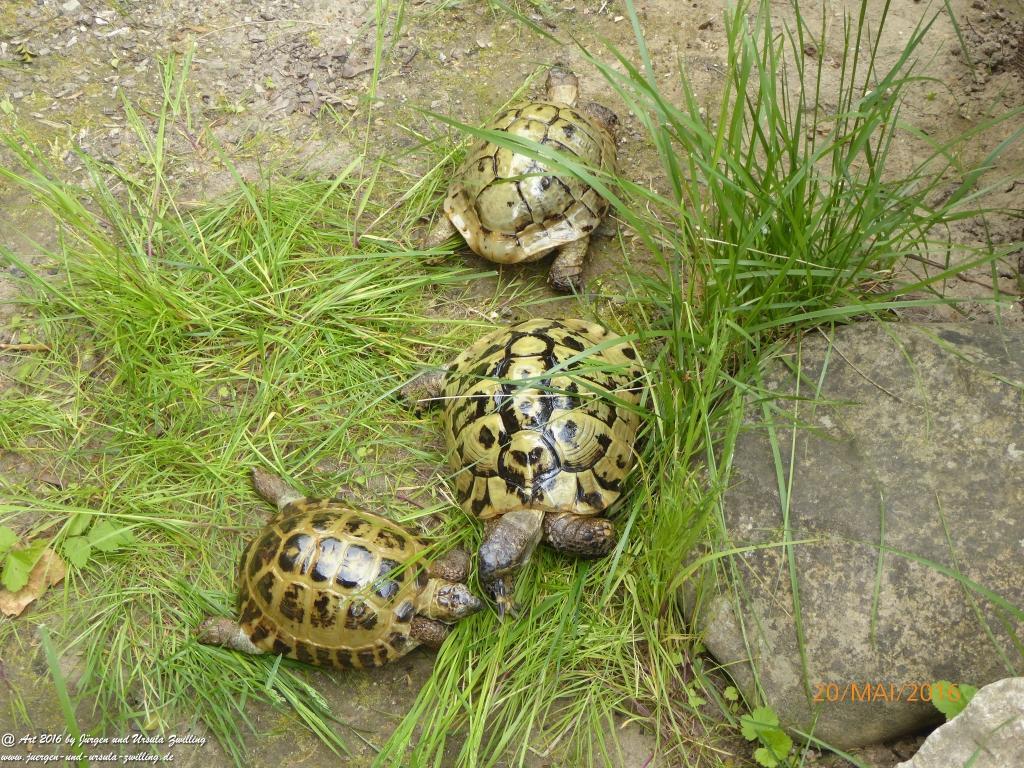 Schildkröten wechseln in die Sommerresidenz