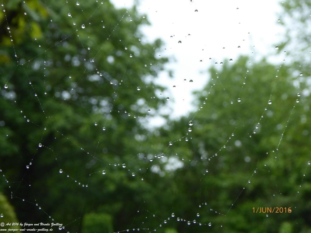 Garten im Spinnenetz bei Regen
