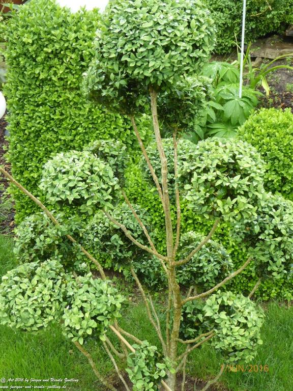 Buchsbaumschnitt - Buchsbaumform