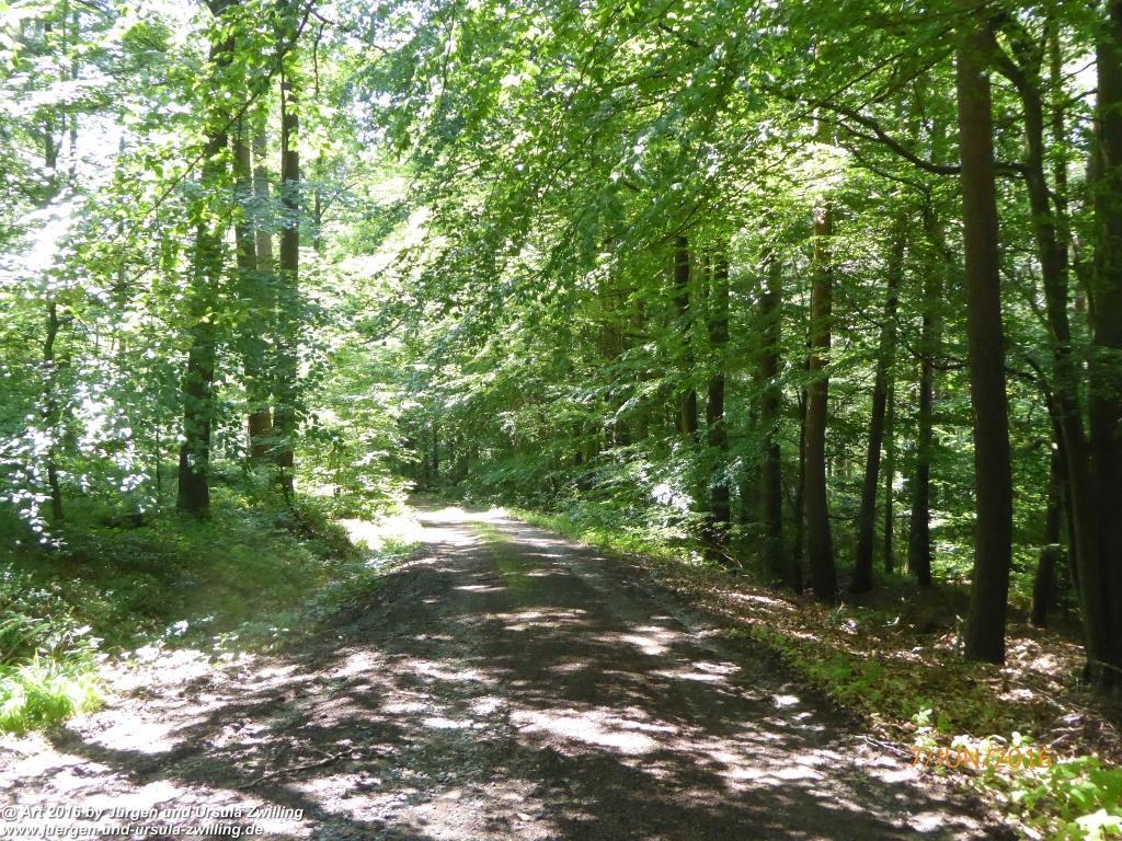 Philosophische Bildwanderung Drachenweg Fafnir - Zwischen Marbach-Stausee und Unter-Mossau - Odenwald