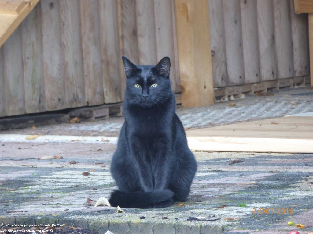 Garten am Morgen mit Katze Mimi