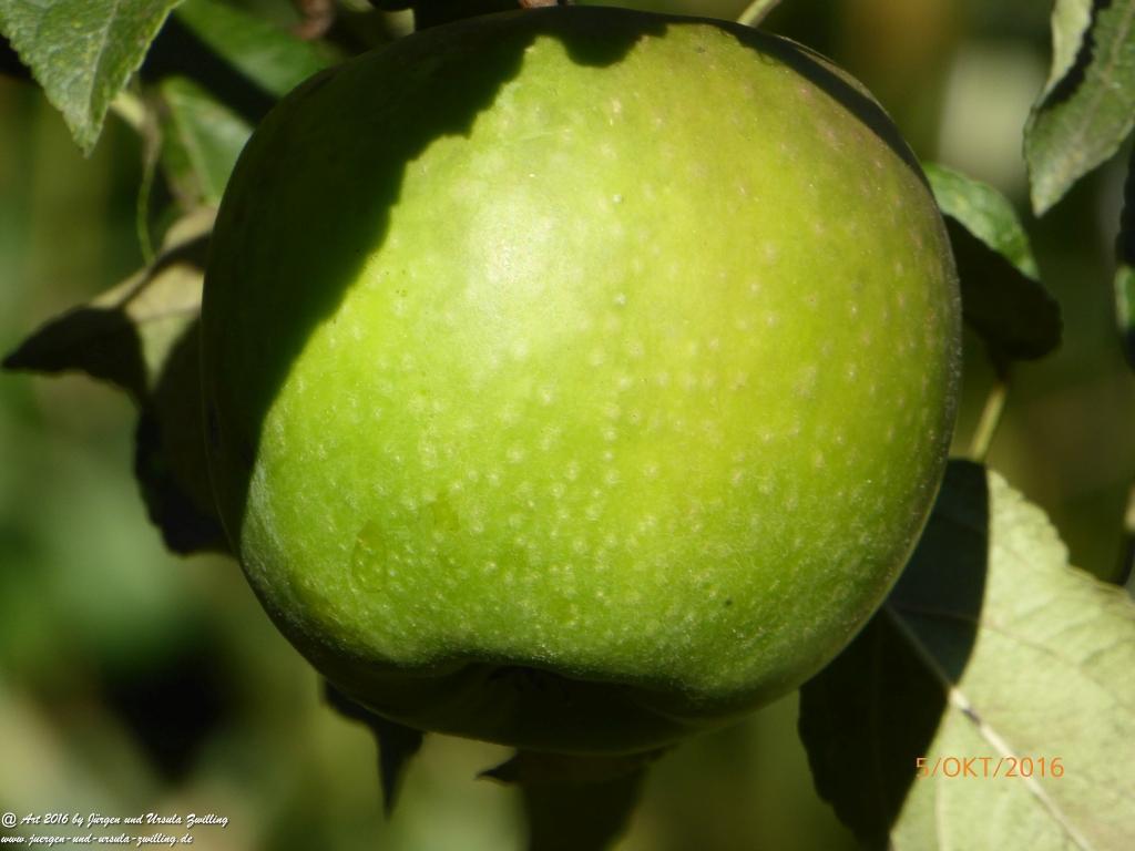 Apfel - Ernte