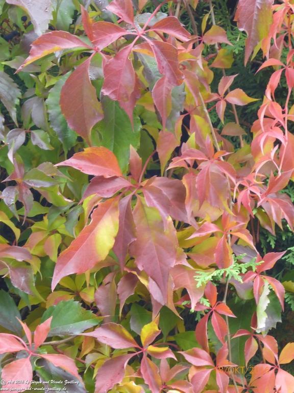 Herbstfarben im Garten