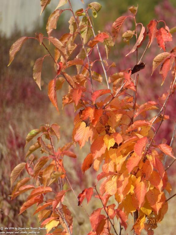 Felder von Mainz Finthen - Ober Olmer Wald in Herbstfarben - Rheinhessen