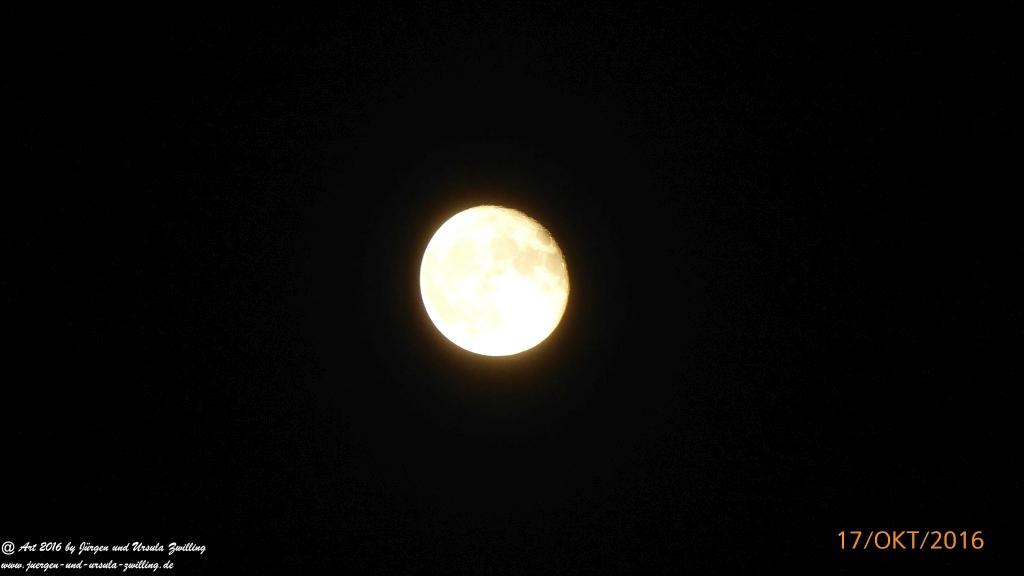 Mondschein über dem Garten