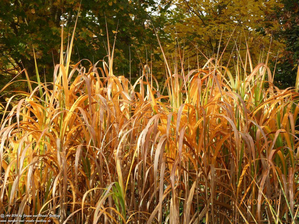 Herbst - Gräser