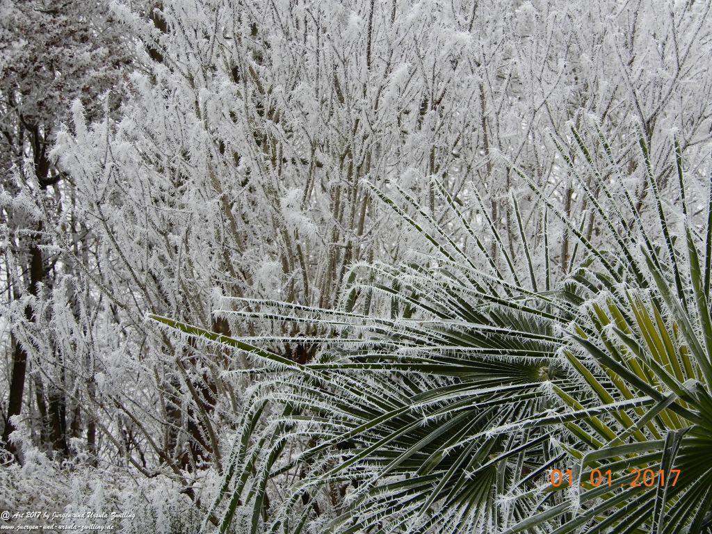 Garten Neujahresblick