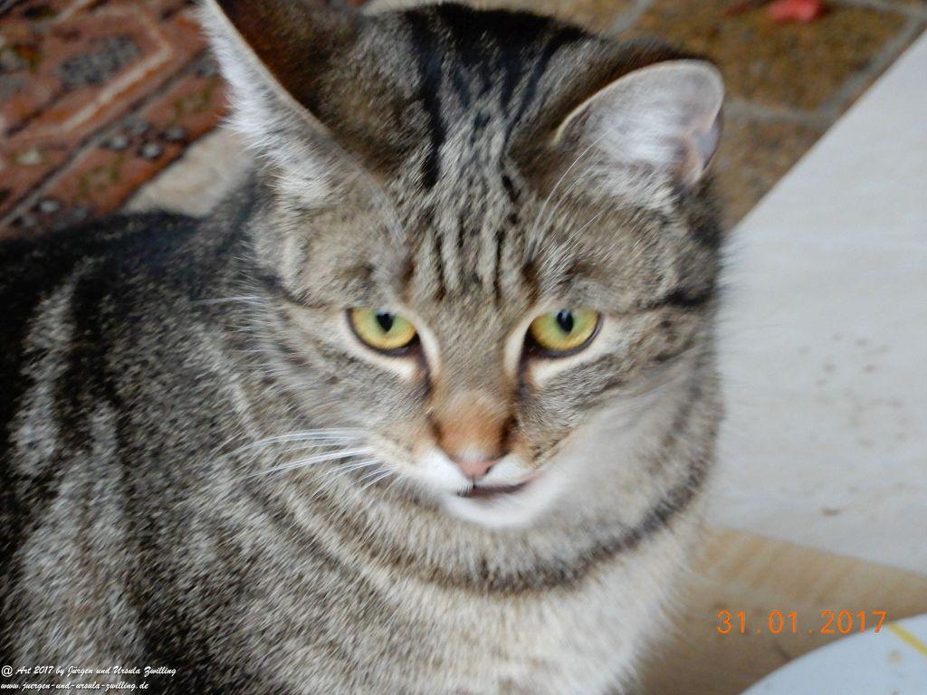 Katze Mimi - Literaturstar meines neuen Buches - Gedichte , Gedanken, ein Plädoyer gegen das Aussetzen und Quälen von Tieren