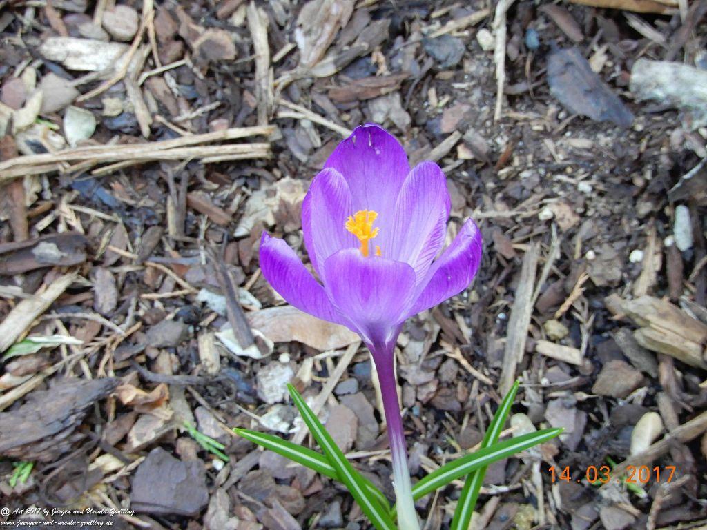 Frühlings - Blütenmix Schneeglöckchen - Schneerose - Krokusse -Primeln - Narzissen - Hyazinthe