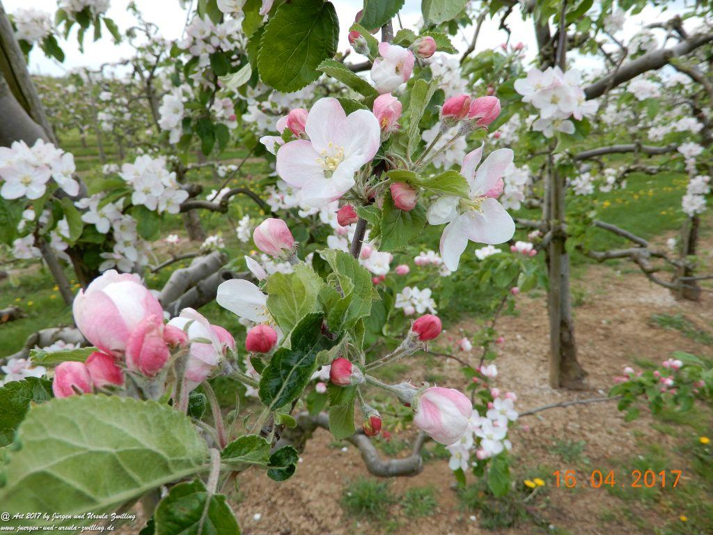 Blüten - Meer - Rheinhessen