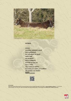 Meinung - Gedicht - Gedanken