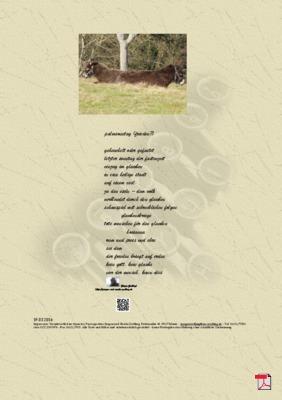 Palmsonntag (Frieden?) - Gedicht - Gedanken