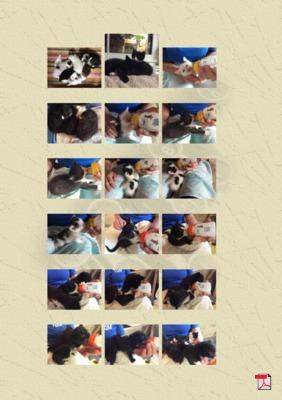 Notruf 06131 Katzenhilfe Mainz e.V. im Ehrenamt - Gedicht - Gedanken
