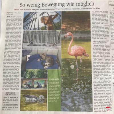 So wenig Bewegung wie möglich - Allgemeine Zeitung Mainz, 07.08.2018